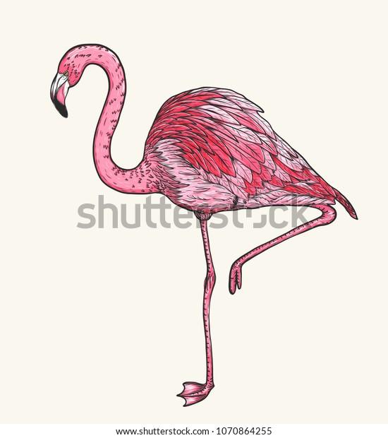 flamingo birds by hand drawingvector birds stock vector (royalty free)  1070864255  shutterstock
