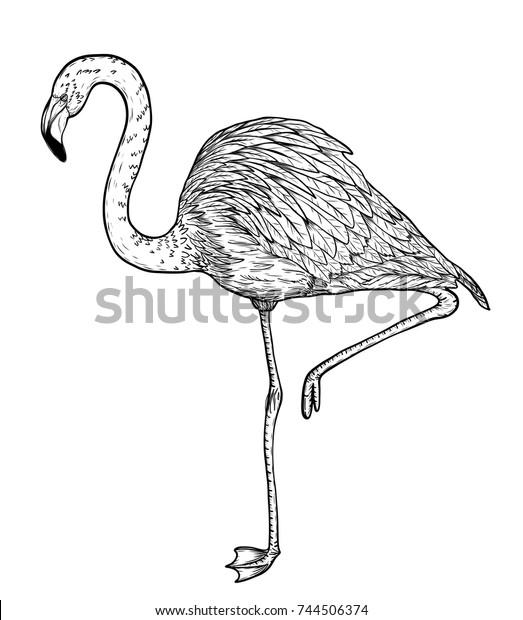 suchen sie nach flamingo birds by hand drawingvector birds-stockbildern in  hd und millionen weiteren lizenzfreien stockfotos, illustrationen und  vektorgrafiken in der shutterstock-kollektion. jeden tag werden tausende  neue, hochwertige bilder ...  shutterstock