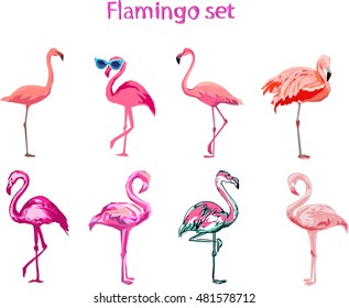 Flamingo illustration, flamingo set vector
