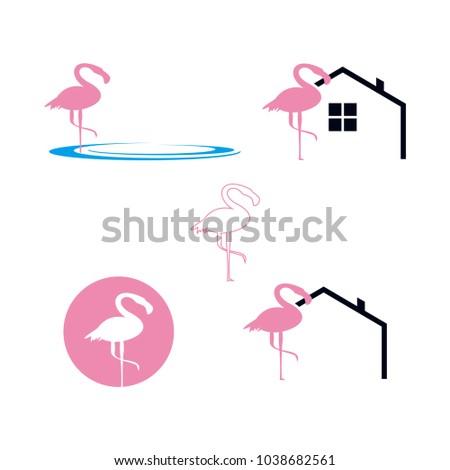 flamingo template logo set water real stock vector royalty free