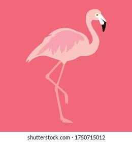 Flamingo tropical bird on pink background. Vector