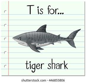 Flashcard letter T is for tiger shark illustration