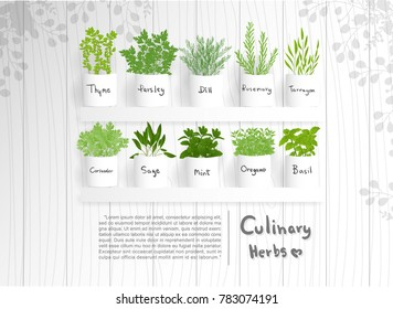 Flat design culinary herbs such as mint, rosemary, coriander,parsley, dill, sage and thyme. Vector illustration.