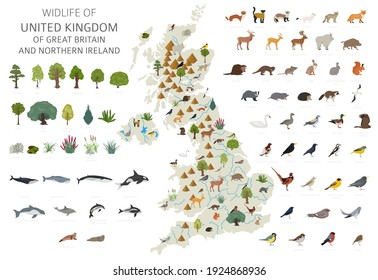 Flat design of United Kingdom wildlife. Animals, birds and plants constructor elements isolated on white set. Build your own geography infographics collection. Vector illustration