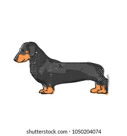Flat drawing vector illustration - Cute dachshund