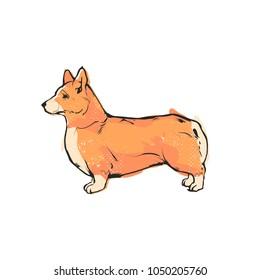 Flat drawing vector illustration - Cute Corgi