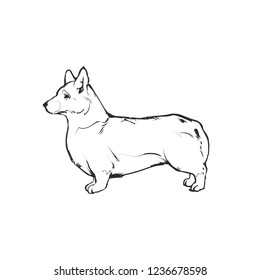 Flat drawing vector illustration - Cute Corgi