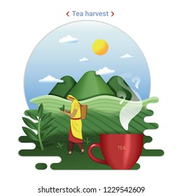 Flat farm landscape illustration of tea harvest. Rural landscape with tea hills and tea field. The woman harvesting tea leaves.