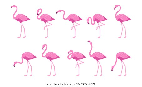 Flat Flamingo. Exotic tropical bird in a flat style. Set of flamingos. Exotic animals. Cute pink flamingos collection in different poses. Nature, wild fauna. Zoo animal. Vector graphics to design