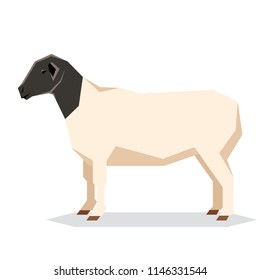 Flat geometric Dorper sheep