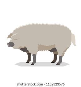 Flat geometric Mangalitsa pig