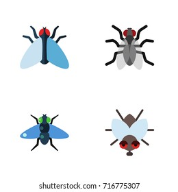 Flat Icon Housefly Set Of Housefly, Gnat, Dung And Other Vector Objects. Also Includes Hum, Mosquito, Insect Elements.
