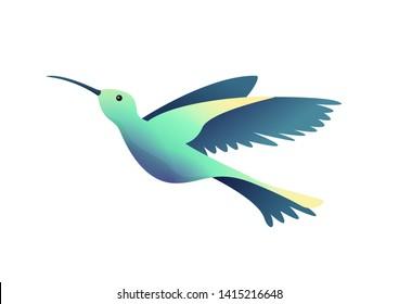 Flat little humming-bird, colibri isolated on white background. Vector illustration