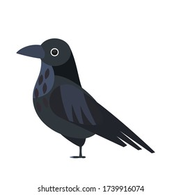 Flat raven illustration. Crow vector isolated image. Wild bird drawing. Halloween decor.