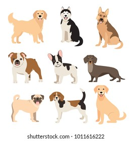 Flat style dogs collection. Cartoon dogs breeds set. Vector illustration isolated on white