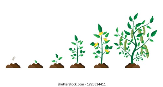 Flat tree growth process. Tree vector icon. Nature background vector. Stock image. EPS 10.
