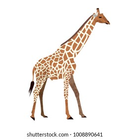 Flat trendy design giraffe. African animal wildlife vector illustration isolated on white background.
