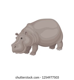 Flat vector design of gray adult hippo. Large African animal. Wild creature. Fauna theme