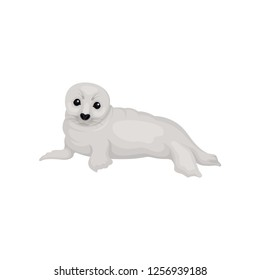 Flat vector design of lying seal pup lying. Funny marine mammal with gray coat and black eyes. Arctic animal