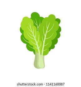 Flat vector icon of fresh collard. Leafy green vegetable. Healthy ingredient for vegetarian salad. Organic food