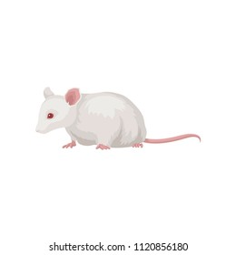 Flat vector icon of laboratory rat. Rodent with white coat, red eye and long pink tail. Home pet. Element for promo poster or flyer of zoo shop