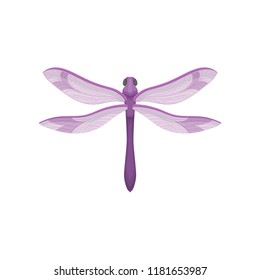 Flat vector icon of small dragonfly with purple body and beautiful wings. Small fast-flying insect
