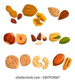 Flat vector icons of nuts and seeds. Hazelnut, pistachio, cashew, nutmeg, walnut, brazil nut, pecan, peanut and almond. Organic food. Vegetarian nutrition