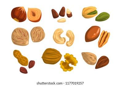 Flat vector icons of nuts and seeds. Hazelnut, pistachio, cashew, nutmeg, walnut, brazil nut, pecan, peanut and almond. Organic food. Vegetarian nutrition
