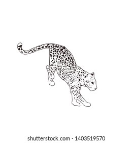 Flat vector illustration - Leopard, isolated on the white background