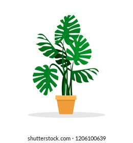 Flat vector illustration. Monstera houseplant in a ceramic pot. An isolated figure.
