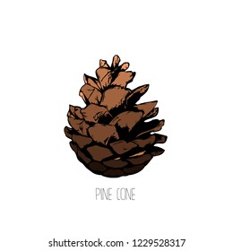 Flat vector illustration - Pine cone