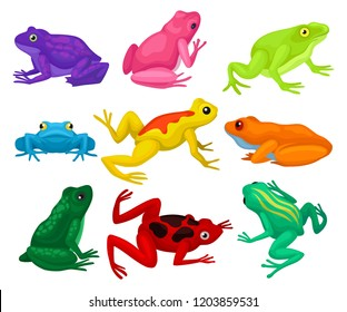 Flat vector set of cartoon frogs. Toads with short squat body, colorful smooth skin and long hind legs