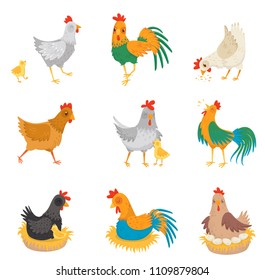 Flat vector set with chickens, little chicks and roosters. Farm birds. Domestic fowl. Elements for advertising poster or banner