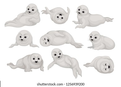 Flat vector set of cute seal pups in different poses. Arctic animal with gray coat and black shiny eyes. Marine mammal