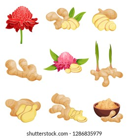Flat vector set of ginger icons. Fresh roots with slices, flowers and powder. Aromatic spice. Natural food