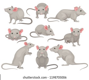 Flat vector set of mouse in different poses. Small rodent with gray coat, big pink ears and long tail. Cute domestic mice