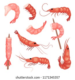 Flat vector set of pink shrimps. Peeled prawns without heads. Marine product. Delicious snack. Seafood theme