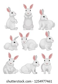 Flat vector set of white rabbit in different poses. Adorable mammal animal. Hare with long ears and short tail