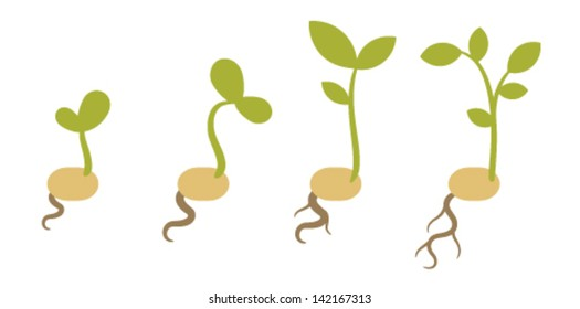 Flat vector sprouts. isolated on white