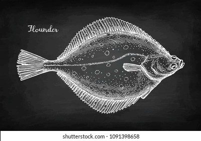 Flatfish. Chalk sketch of flounder on blackboard background. Hand drawn vector illustration. Retro style.