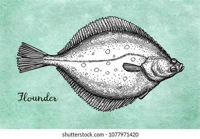 Flatfish. Ink sketch of flounder. Hand drawn vector illustration on old paper background. Retro style.
