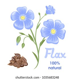 Flax flowers and seeds isolated on white background. Vector illustration in cartoon simple flat style.