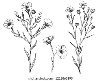 Flax plant and flower. Botany Set.  Vintage flowers. Black and white illustration in the style of engravings. retro. Botanical flowers. Herbal  Herbarium.