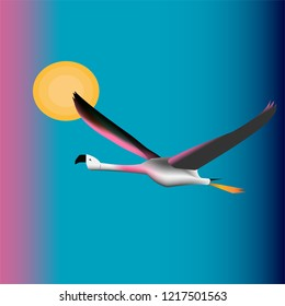 Flaying flamingo, freedom