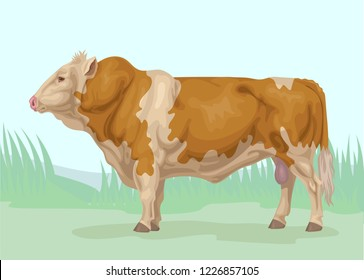 Fleckvieh yellow piebald bull