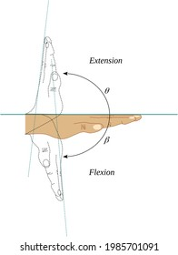 Flexion and extension movements of the wrist joint - Shutterstock ID 1985701091