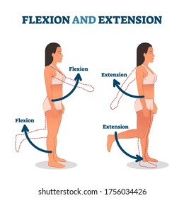Flexion and extension vector illustration. Anatomical movement description. Educational arm or leg exercise to bend or straighten body parts. Normal healthy patient as biological kinesiology example.