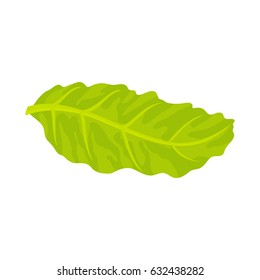 Floating lettuce leaf.  Menu or a recipe illustration. Fresh and tasty food or cooking ingredient isolated on white background.