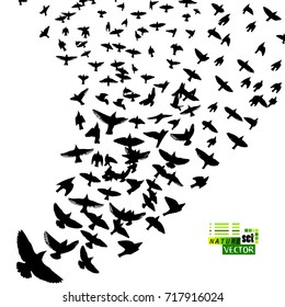 Flock of birds abstraction. Vector