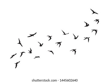 Flock of Birds, Black and White Vector Design